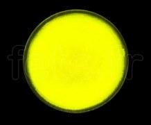 SPOT ROND - Fluo - Ø 47mm - Adhésif - JAUNE