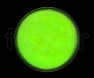 SPOT ROND - Fluo - Ø 47mm - Adhésif - VERT